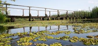 gammalt trä för bro Royaltyfri Fotografi