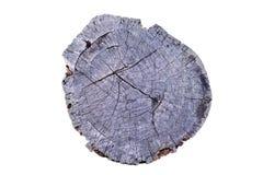 Gammalt trä för cirkel för årlig cirkel för träd (stansad) Arkivbild