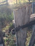 gammalt trä för port Fotografering för Bildbyråer