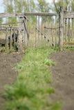 gammalt trä för staket Royaltyfri Bild