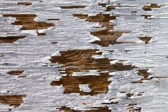 gammalt trä för white för målarfärgskalningstextur Fotografering för Bildbyråer