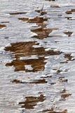 gammalt trä för white för målarfärgskalningstextur Royaltyfri Fotografi