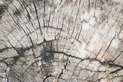 Gammalt trä knäckt textur av den utomhus- stubben Royaltyfri Foto