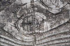 Gammalt trä med fnuren Royaltyfria Foton