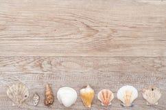 Gammalt trä med havsskal Fotografering för Bildbyråer