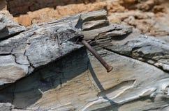 Gammalt trä med rostigt spikar Royaltyfri Fotografi