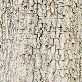 gammalt trä Seamless Tileable texturerar Arkivbild