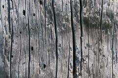 Mycket gammalt stiga ombord med en definierad brunn strukturerar Arkivbild