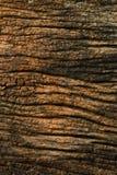 Gammalt trä texturerad closeuptappning Royaltyfri Bild