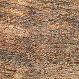 Gammalt trä texturerar bakgrund Royaltyfria Bilder