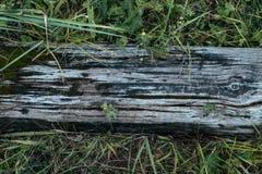 Gammalt träbräde, mot en bakgrund av grönska, sommarhöstdag i natur Textur för bakgrunden av royaltyfri fotografi