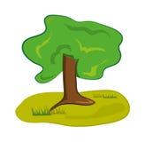 Gammalt träd för skoggräsplan Royaltyfri Fotografi