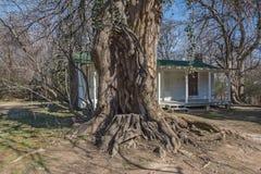 Gammalt träd framme av stugan Royaltyfria Foton