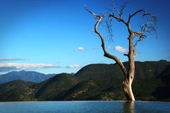 Gammalt träd i bergsjön Fotografering för Bildbyråer