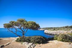 Gammalt träd i den Cala pi Arkivfoto