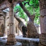 Gammalt träd i Ranakpur den Jain templet (Rajasthan, Indien) Royaltyfri Fotografi