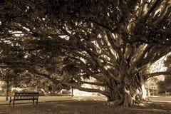 Gammalt träd med den tomma bänken i parkera Arkivfoton