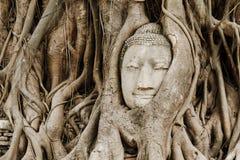 Gammalt träd med det buddha huvudet Royaltyfri Bild