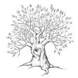 Gammalt träd med hjärta arkivfoto