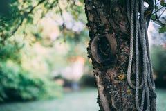 Gammalt träd med repet royaltyfria foton