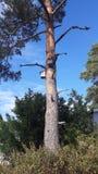 Gammalt träd som har varit där för åldrar royaltyfria foton