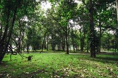 Gammalt träd vars vridna stam växte ner in mot jordningen därefter c arkivbilder