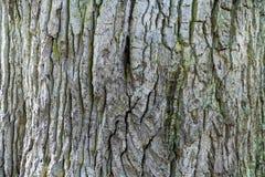 Gammalt trädskäll med den gröna ängen som en naturlig bakgrund royaltyfri bild