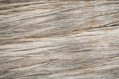 Gammalt träträd i Forest Texture Background Image Arkivfoto