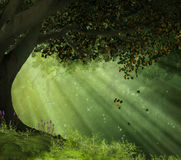 Gammalt träd i en härlig dag Arkivfoton