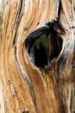 gammalt treestamfönster Royaltyfri Foto