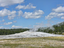 Gammalt troget, Yellowstone nationalpark Royaltyfria Bilder
