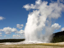 Gammalt troget, Yellowstone nationalpark Royaltyfri Foto