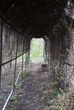 Gammalt växthus royaltyfri fotografi