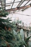 Gammalt växthus, i europeisk stil Arkivbild
