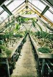 Gammalt växthus med olika kakturs som arbeta i trädgården tema Arkivfoto