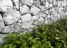 Gammalt vagga väggen Fotografering för Bildbyråer