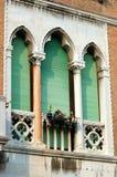 gammalt venetian fönster för grön italy lancet fotografering för bildbyråer