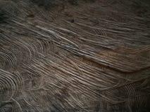 Gammalt wood golv med wood termit Royaltyfri Bild