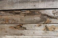 Gammalt wood golv med wood termit Arkivfoton