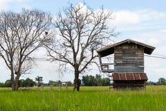 Gammalt wood hus med det döda trädet Royaltyfri Fotografi