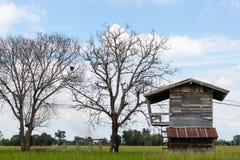 Gammalt wood hus med det döda trädet Royaltyfri Foto