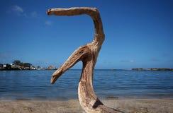 Gammalt wreckegdeträ på stranden Royaltyfria Foton