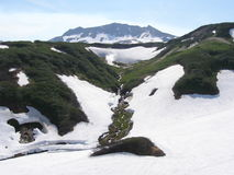 Gamme de montagne de neige Photographie stock libre de droits