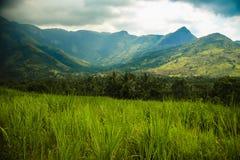Gamme de montagne de Munnar de kerela Photo stock