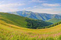 Gamme de montagne de panorama Paysage de montagne d'été avec des fleurs photos stock