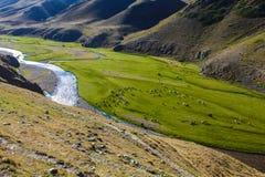 Ganado que pasta en meseta del montaje con el río en Turgen, Kazajistán Imagen de archivo
