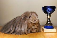 Ganador del conejillo de Indias Foto de archivo libre de regalías