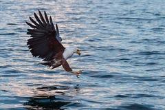 Gancho agarrador del águila de pescados Foto de archivo