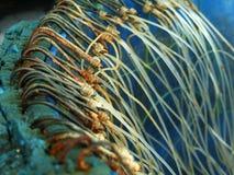 Ganci di pesca immagine stock libera da diritti