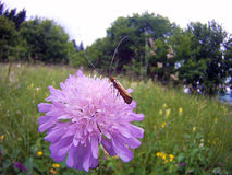 Gandac floare Royalty-vrije Stock Afbeelding
